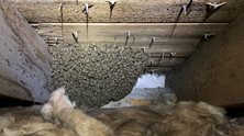 peebles - The Border Bee Reiver - Live Bee Nest Removals